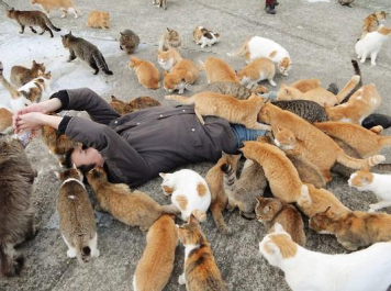 cats-in-aoshima-island-outnumber-humans-six-to-one